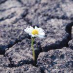 Flower_has_grown_in_arid_cracked_barren_soil