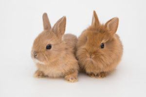 Bunny_funny_rabbits_on_the_white_background