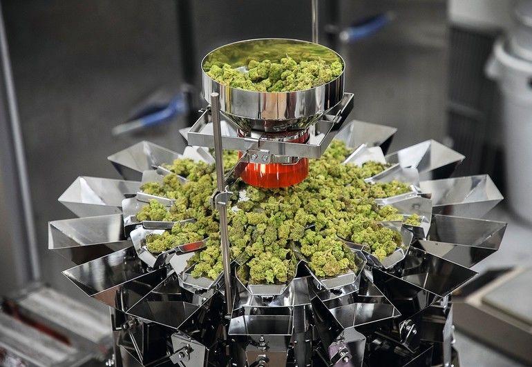Ishida_GmbH_Mehrkopfwaagen_CCW-RV_Cannabis